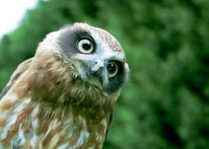 Quizzical Owl